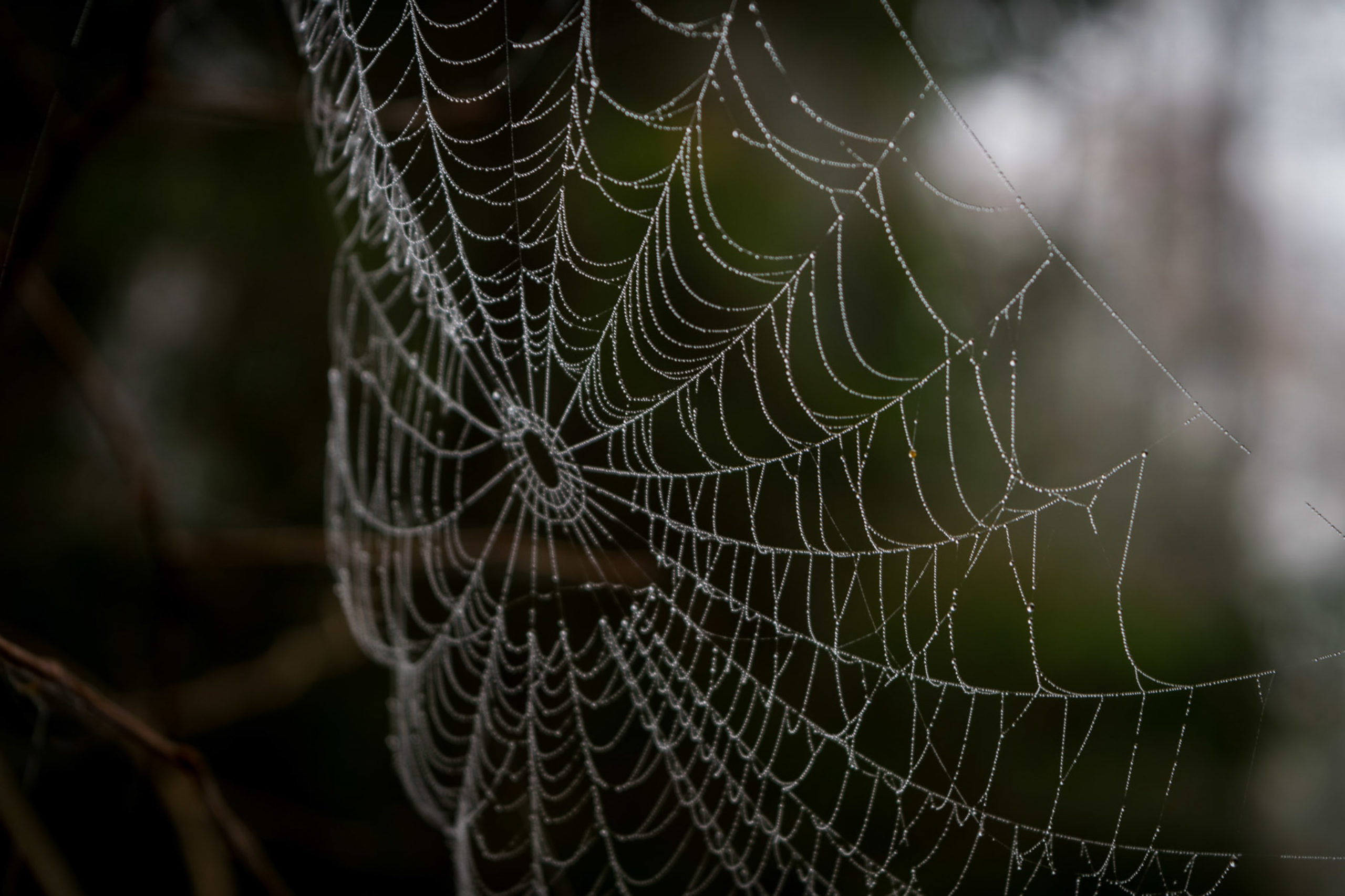 Saved by Spiderwebs